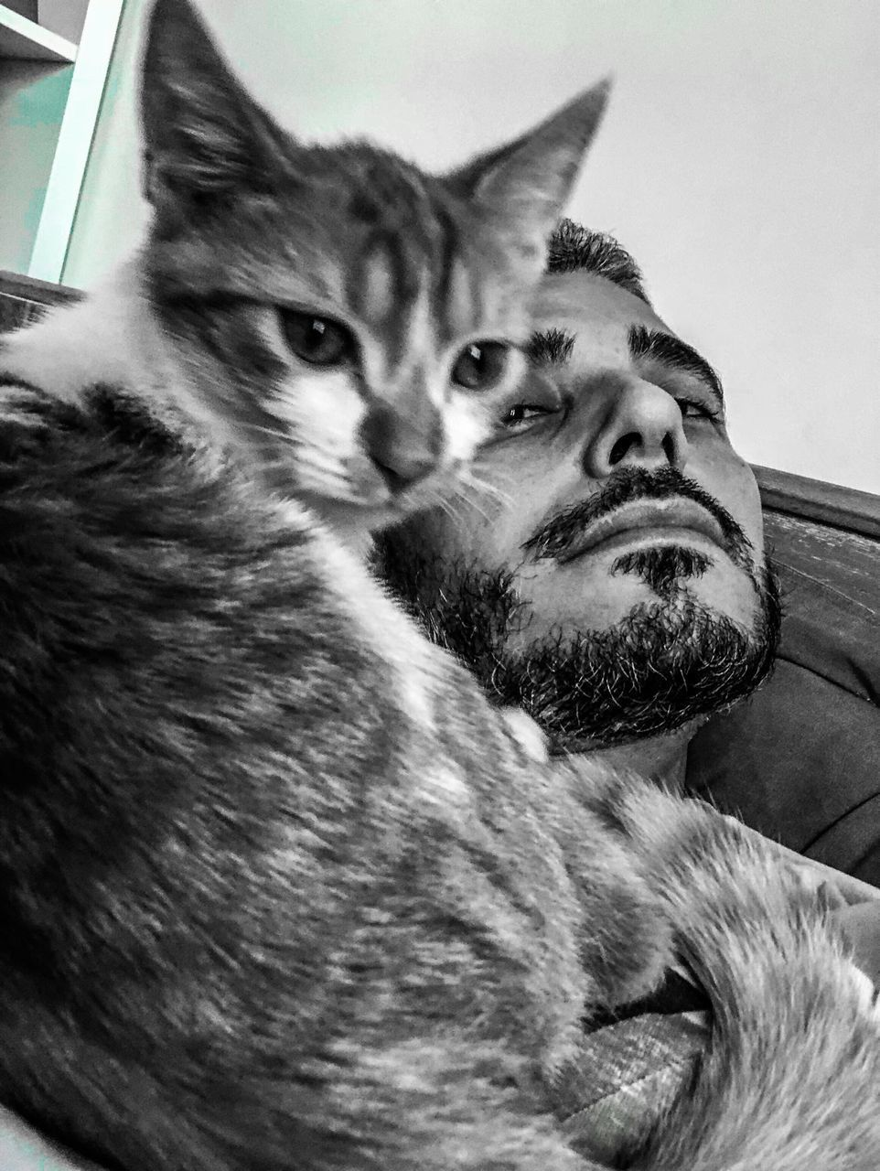 mammal, domestic animals, pets, domestic, one animal, real people, vertebrate, one person, portrait, lifestyles, beard, facial hair, home interior, looking at camera, cat, relaxation, leisure activity, pet owner