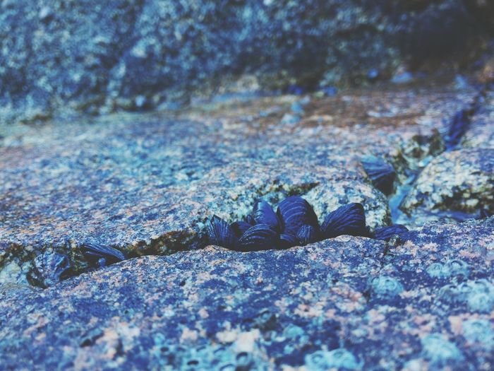 Les gens appreciraient-ils plus les photos de moules en gros plan aux paysages de bord de mer? Côté Moules Roche Mer Nature Rock Sea Mussels French Coast Ocean