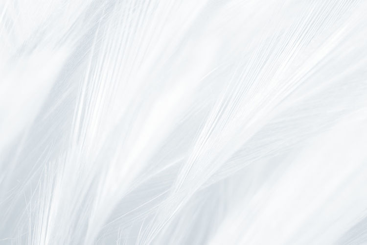 White Color Backgrounds Full Frame No People Close-up Softness Nature Textured  Hair Pattern Abstract Textile Feather  Lightweight Extreme Close-up Fluffy Selective Focus Indoors  Simplicity Abstract Backgrounds Clean