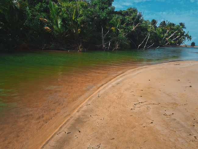 Beach Beauty In Nature Day Nature No People Outdoors Palm Tree River And Sea River Mouth Sand Scenics Sea Sky Tranquil Scene Tranquility Tree Tropical Climate Water My Year My View