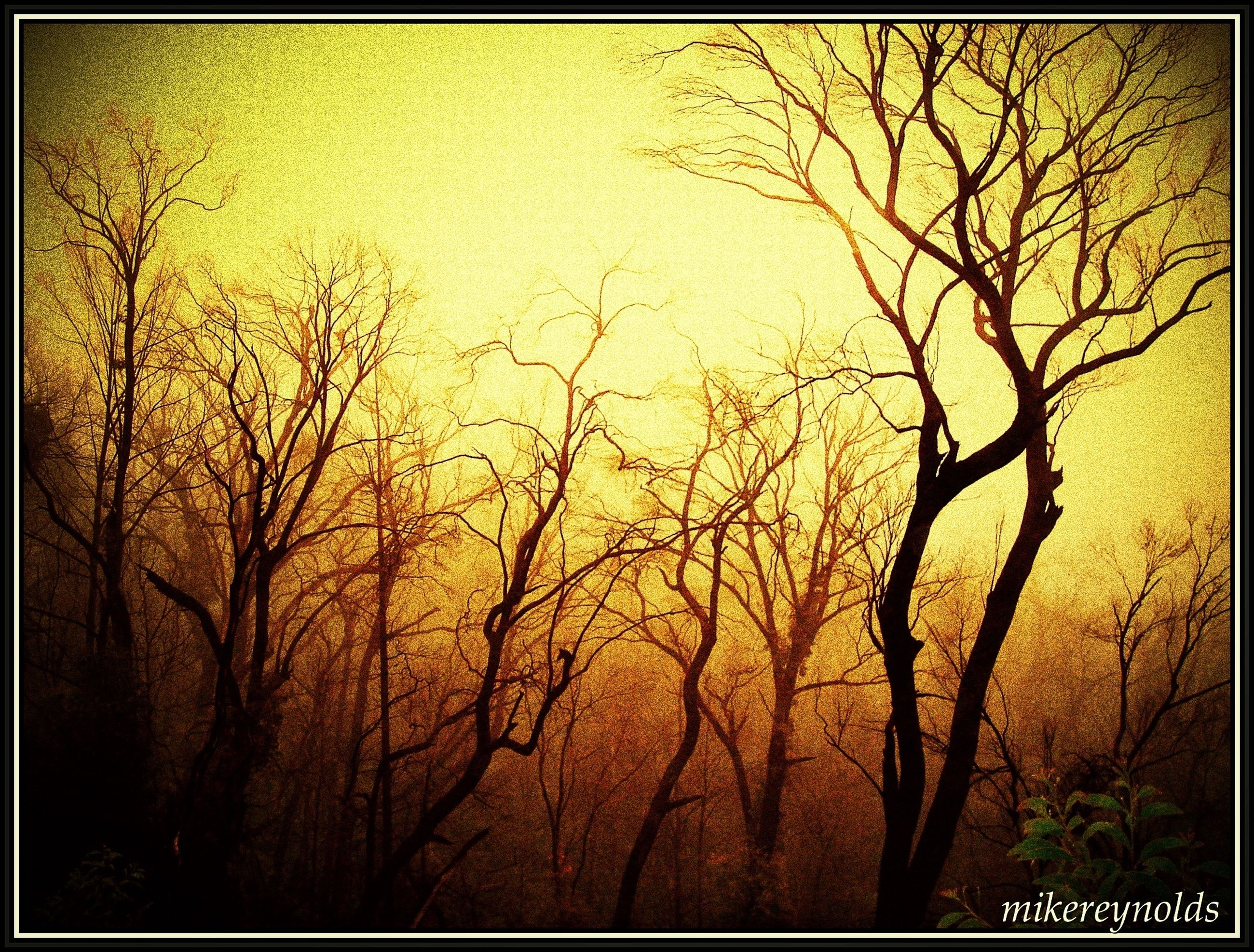 transfer print, auto post production filter, tree, bare tree, branch, tranquility, nature, tranquil scene, scenics, beauty in nature, growth, sky, autumn, outdoors, tree trunk, sunset, no people, yellow, orange color, day