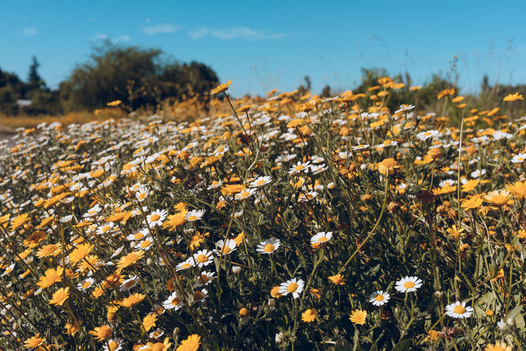 Plant Growth Beauty In Nature Field Land No People Flower Nature Tranquility Flowering Plant Day Focus On Foreground Fragility Close-up Vulnerability  Sky Sunlight Outdoors Tranquil Scene Freshness Flower Head
