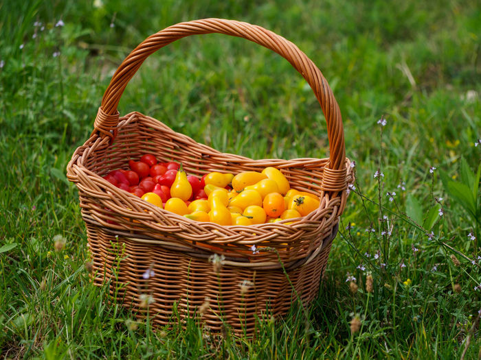 Close-up of fruits in basket on field