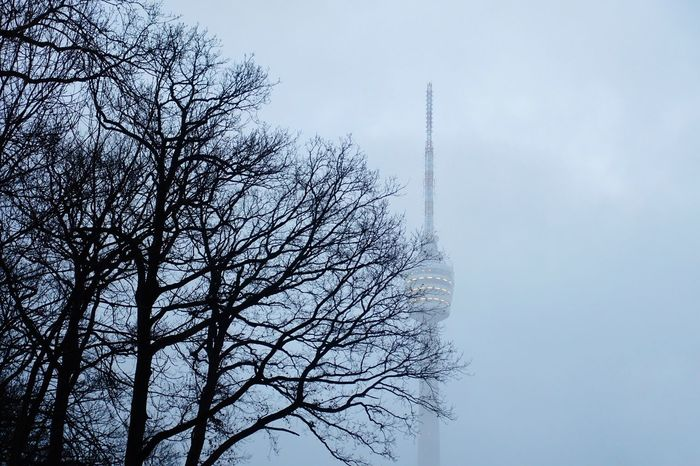 Good Morning! Sky Tree Nature Low Angle View Cloud - Sky No People Day Outdoors Bird Beauty In Nature Close-up Pixelated Taking Photos Eyeem0711 Firts Eyeem Photo Stuttgart Foggy Day Nature_collection Fog Architecture