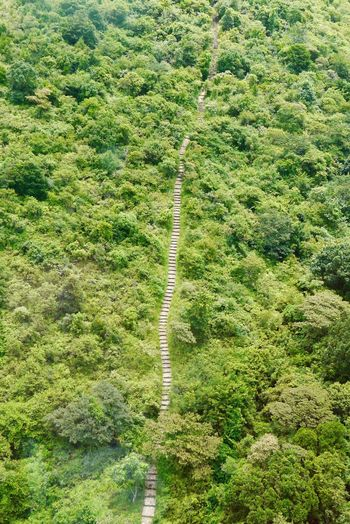 Path to the summit Travel Green Steps Path Plant Growth Green Color High Angle View Day Nature Tranquility Beauty In Nature No People Land Tranquil Scene Outdoors Scenics - Nature Landscape Tree Full Frame Environment