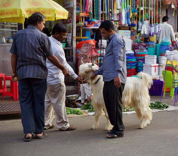 adorable goat Goat India Pune Street Life Adorable Animals Attraction Day Daylight Hairy Goat People Street Streetphotography Streetsofindia