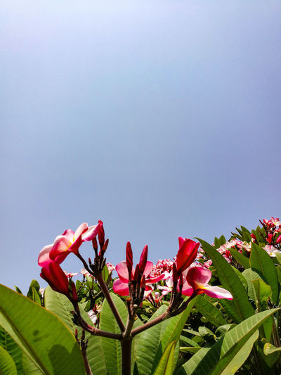 LEAVES, BUDS, AND FLOWERS Flora Nature Clear Sky Blue Sky Freshness Flower Flower Head Red Sky Close-up Plant Green Color Flowering Plant Plant Life In Bloom Blossom Blooming Petal Pollen Stamen Pistil