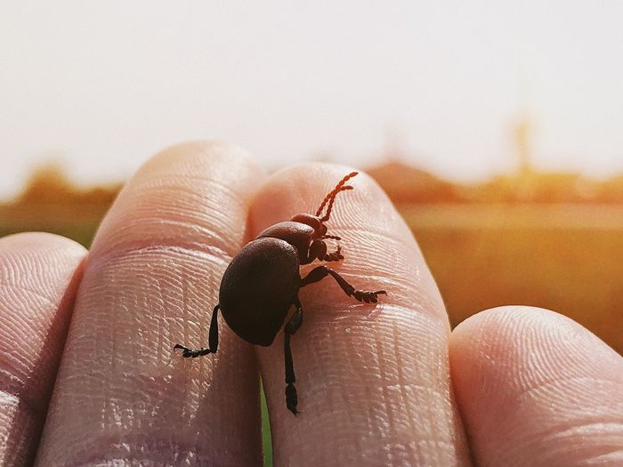 Extreme close-up of hand holding black bug outdoors