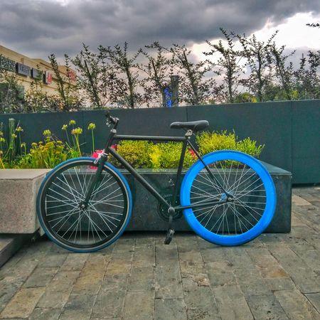 Mi compañera de viajes! Bike Fixie Urban Coacalco Blue