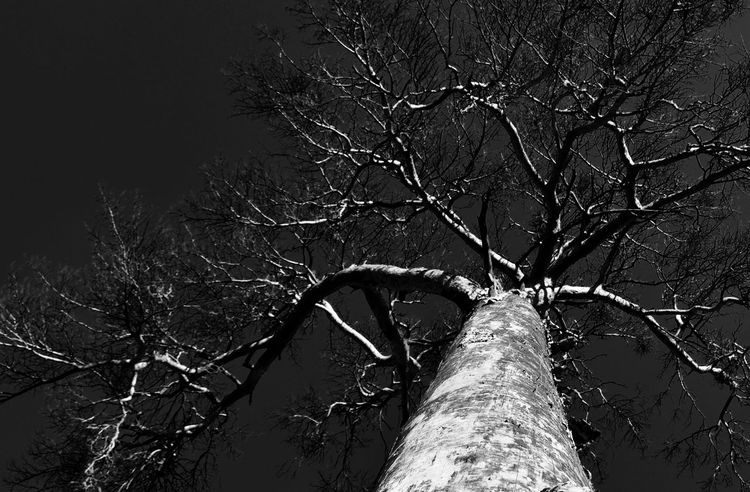 very strange atmosphere 3XPSUnity B&w B&w Photography Bare Tree Beauty In Nature Black And White Blackandwhite Blackandwhite Photography Branch Day EyeEm Best Shots - Black + White EyeEm Gallery EyeEm Nature Lover Growth Low Angle View Monochrome Monochrome Photography Nature No People Outdoors Photooftheday Sky Tranquility Tree Unusual