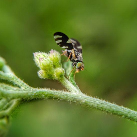 Bee Full Length