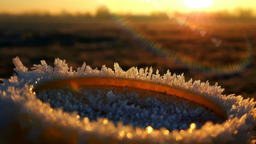 Close-up of snow during sunset