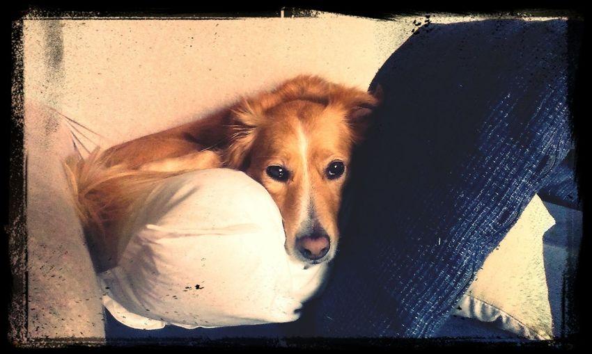 Dog Life Mydog♡ Mybeautifuldog Ilovemydog