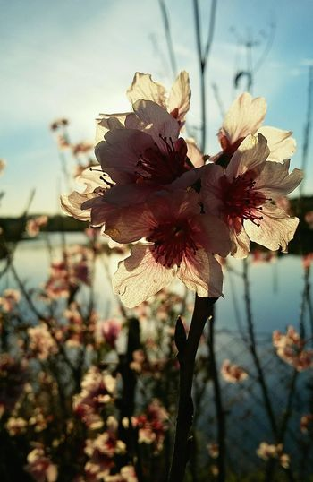 Floral EyeEm Best Shots EyeEm Gallery Vintage EyeEm Nature Collection Nature Flowers Flower Collection Skycollection