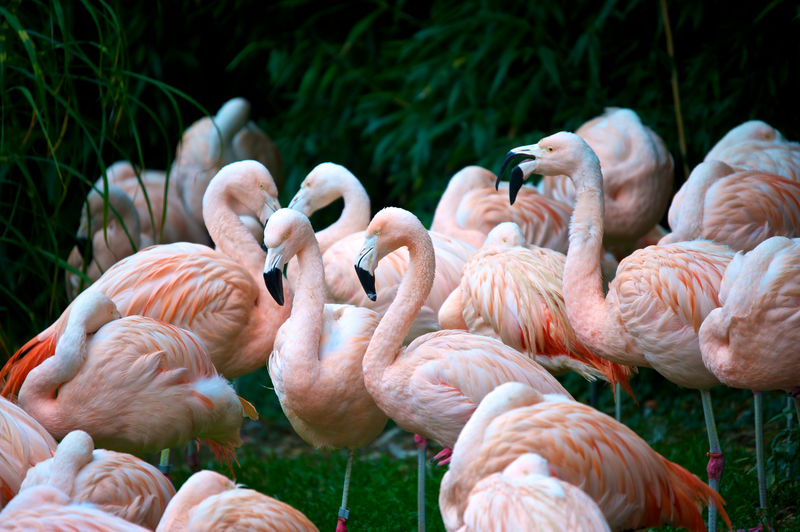 pink flamingos Animal Themes Animal Wildlife Beauty In Nature Bird Close-up Flamingo Millennial Pink Nature Nature Photography No People Outdoors Pink Travel Pictures EyeEmNewHere The Week On Eyem