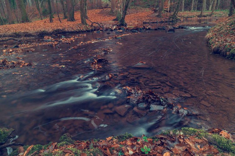 River in the forest in autumn. Art Beauty In Nature Backgrounds Water Tree Forest Nature Land Motion Plant No People Day Long Exposure Flowing Water Flowing Scenics - Nature Non-urban Scene Blurred Motion River Environment Outdoors Stream - Flowing Water Pollution Shallow