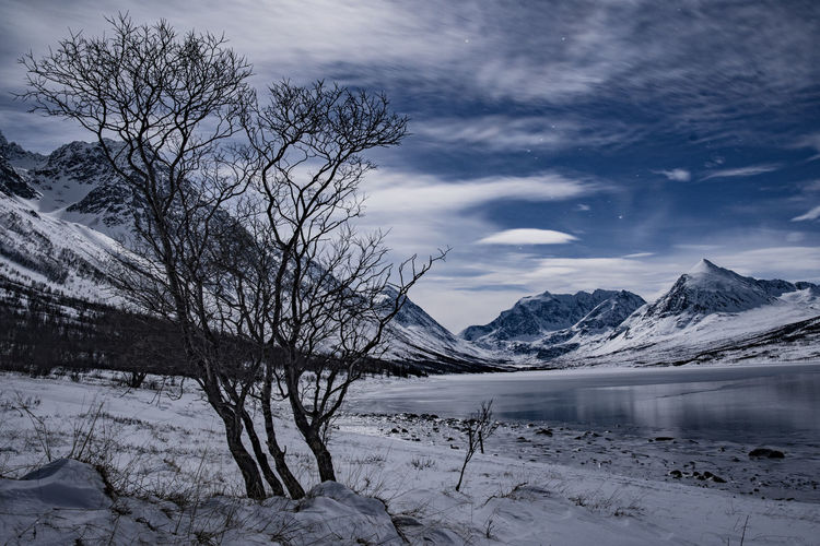 Night scene in the Lyngen Alps Landscape Nature Lake Fjord Night Sky Stars Clouds Tree Mountains Snow Cold Temperature Ice Winter Norway Arctic Beauty In Nature Cloud - Sky Scenics - Nature Water Tranquility Tranquil Scene Mountain No People Non-urban Scene Bare Tree Environment Snowcapped Mountain