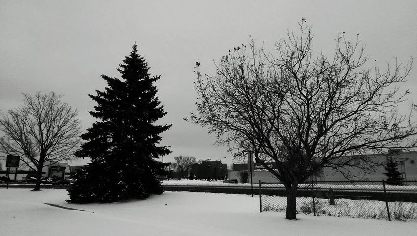 Winter Wonderland Minnesota Taking Photos Snow ❄