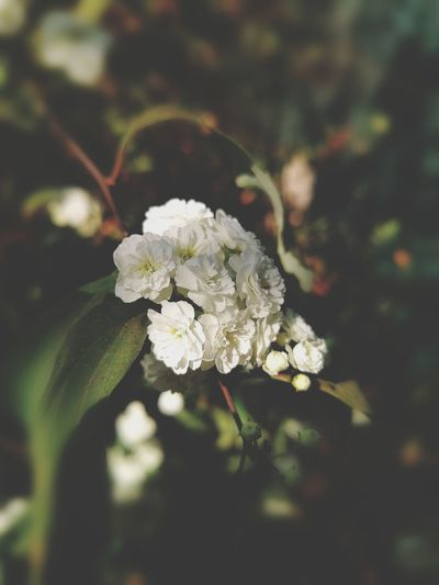 Flower White Color Close-up Nature Fragility Flower Head Day No People Growth Springtime Freshness Beauty In Nature Outdoors The Week On EyeEm