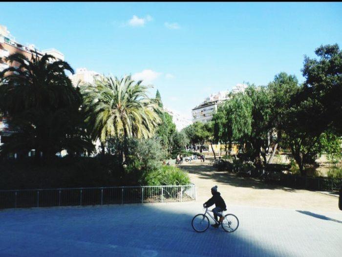 Streetphotography Bike Palm Trees Barcelona City Life