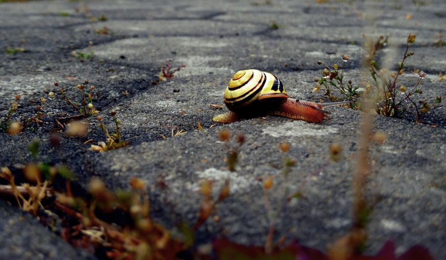 Die Welt zu unseren Füßen Animal Wallpaper Snail Collection Snail Photography Snailshell Bottom Schnecke Schneckenhaus Schneckentempo Bottomview Snail Animal Themes Slow Crawling EyeEmNewHere Slimy