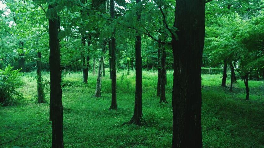 자연은 얼마나 아름다운지.
