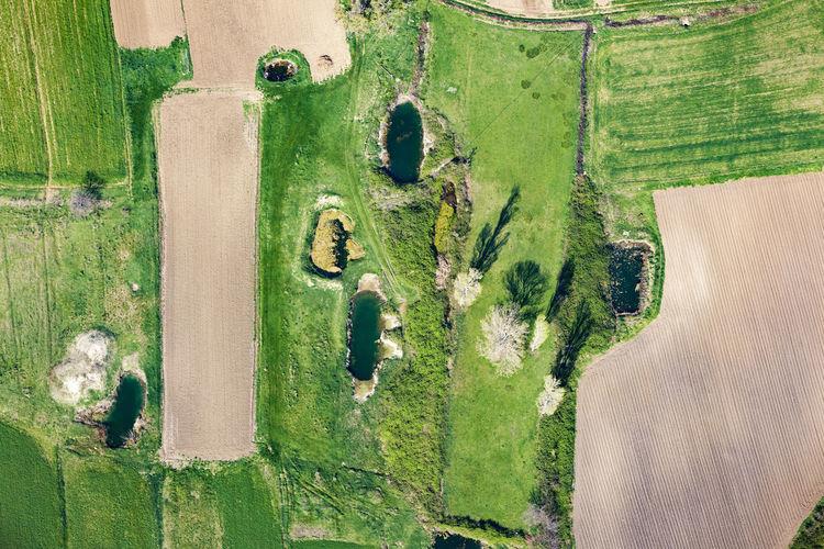 Directly above shot of agricultural landscape