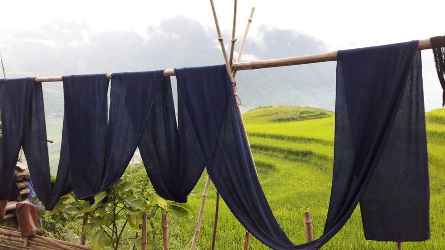 NorthVietnam Tavan  Sapa, Vietnam Indigo Clothes Woman At Work Rice Terraces Meet Travel Treck