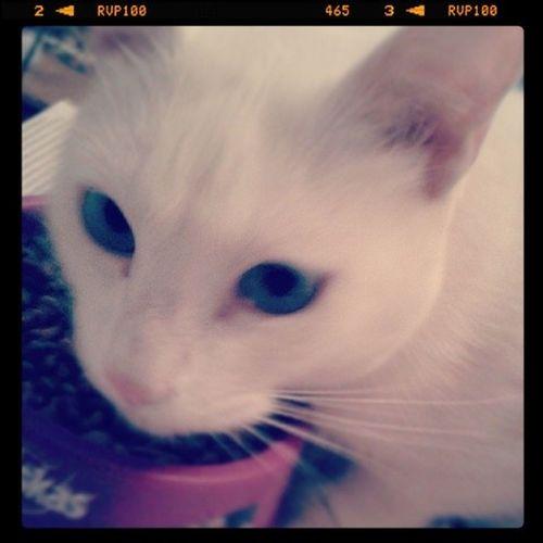 QueenKitty ♥♥♥♥♥♥