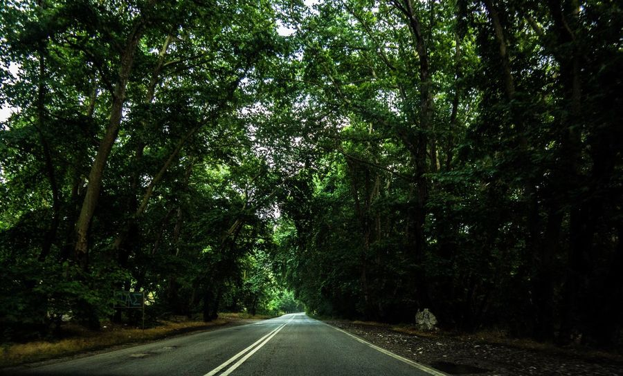 Tree Road The Way Forward Nature Street Day Beauty In Nature Forrest Photography Forrest Nature Forrestmagic Photography Moment  PhotographyIsMyPassion Photooftheweek Live For The Story Forrestwalk Forrest Adventure Photooftheday Photoeverywhere Photoeveryday Photographyislifee Photography Moment  Streetphotography EyeEmNewHere Place Of Heart The Street Photographer - 2017 EyeEm Awards The Great Outdoors - 2017 EyeEm Awards