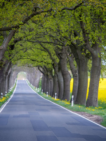contra road Baltic Sea Olympus Rapeseed Field Road Trees Day Edithnerophotography Fischland-darß-zingst Grass Grove Nature No People North Of Germany Outdoors Rapeseed Road Spring Flowers Street The Way Forward Tree