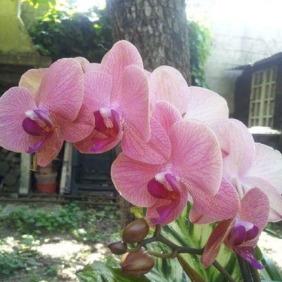 "My orchid... section aurea. ""I'm tearing themaskoffnatureto look at the face of God"" Nature Orchid Noedit Flower sectioaurea goldenratio fibonacci sheldoncooper garden"