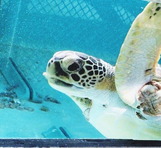 Sea Turtle Wildlife & Nature Protectedspecies