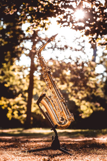 Saxophone in the Golden hour Saxophone Saxophonelife Insturument Music Song Sunset Goldenhour Goldenhourphotography Saxophon Tree Arts Culture And Entertainment Close-up Woodwind Instrument Saxophonist Jazz Music Musical Instrument Flute Musical Instrument String Blues Music Musical Equipment Brass Instrument  Wind Instrument