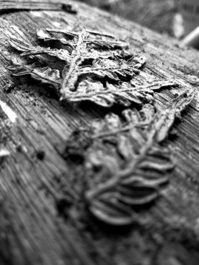 Ageless Log Black And White Black And White Photography Macro Close-up Leaf Fern Nature Rewilding Monochrome EyeEm Nature Lover EueEmNewHere Wood - Material Table Backgrounds Textured  Close-up Detail Leaf Vein Firewood Fallen Timber Knotted Wood Full Frame Leaves Woodpile