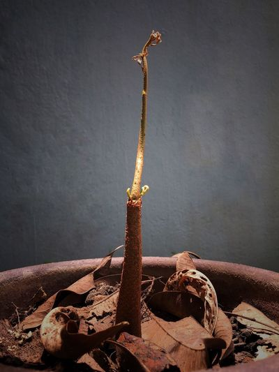 Withered plant grows in the tree and decayed leaf in the pot. Grow Fermentation Soil Abstract Art Pottery Leaf Tree Nature No People Nature Wall - Building Feature Metal Indoors  Day Water Close-up