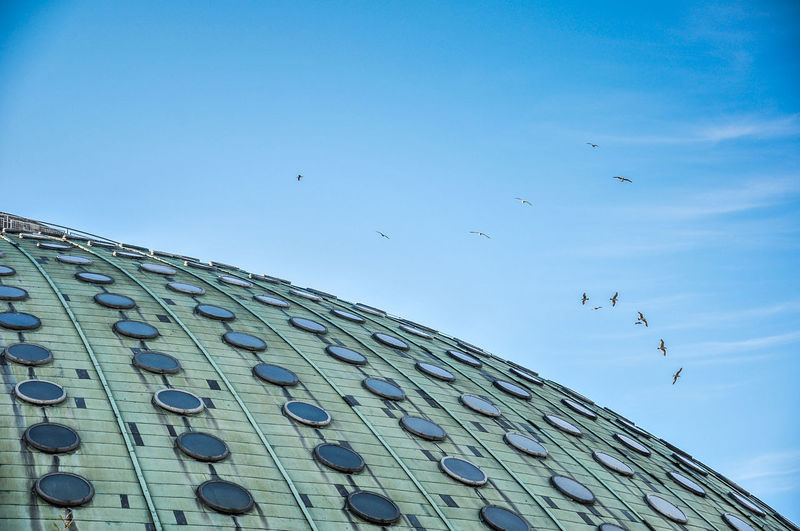 Architecture Bird Blue Cloud Copper  Dach Day Dome Flying Kupfer Kuppel Low Angle View No People Pavilhão Rosa Mota Roof Sky The Architect - 2016 EyeEm Awards