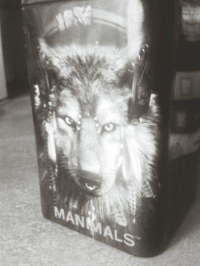 Wolf Manimals Music