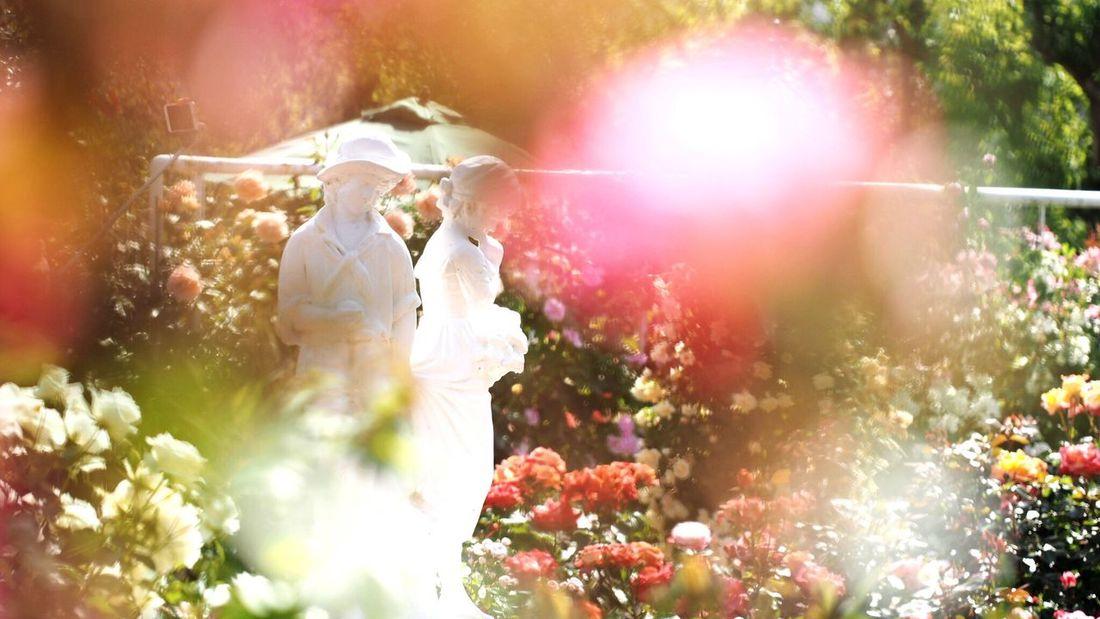 姫路バラ園 Spring Beautiful Nature Flowerlovers Flower Photography EyeEm Nature Lover EyeEm Best Shots Enjoying Life Green Nature Roses Rose Garden