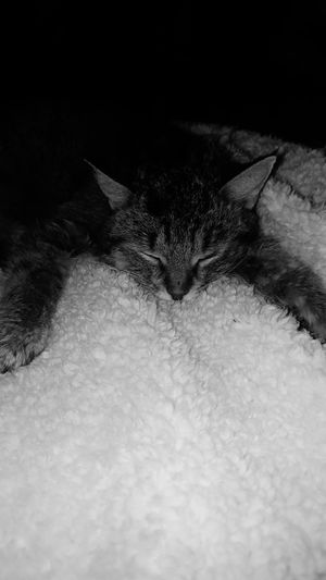 EyeEm Animal Lover Blackandwhite Photography Blackandwhite Cats Rescue Cat My Boy Cheese! Relaxing Enjoying Life Cutie Capokitty Feline Tabby AdoptDontShop Bestfriend Cat♡ Catsofinstagram Cat Lovers
