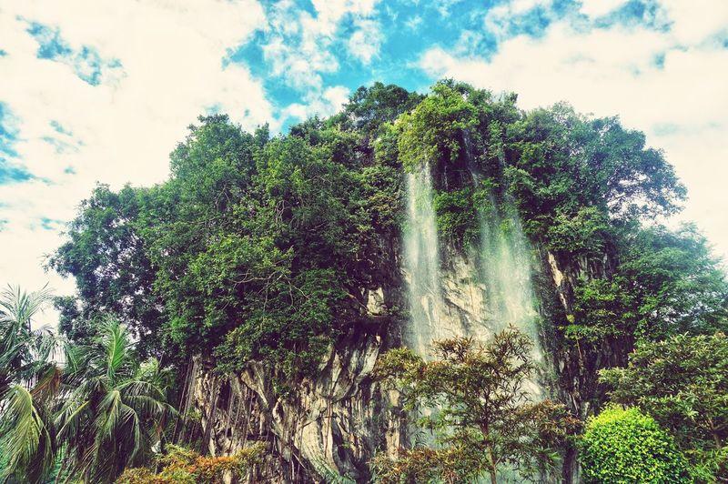 Waterfall Tree