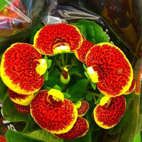 Flowers!?