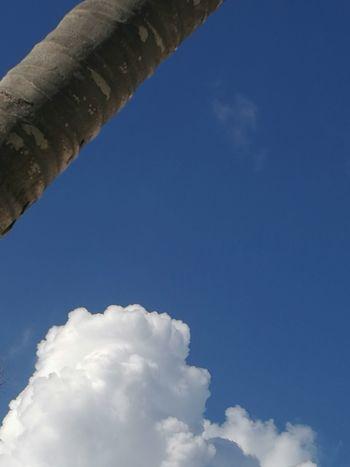 Sky Palm Blue Sky