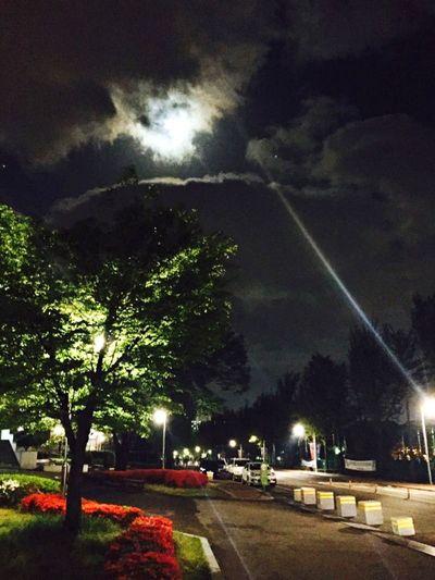 Sky Tree Cloud - Sky Night No People