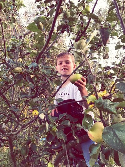 Picking apples! Country Living Country Life Apples Autumm Fruits Picking Apples Plant Tree One Person Child Childhood Real People Day Boys Outdoors Casual Clothing Growth Nature