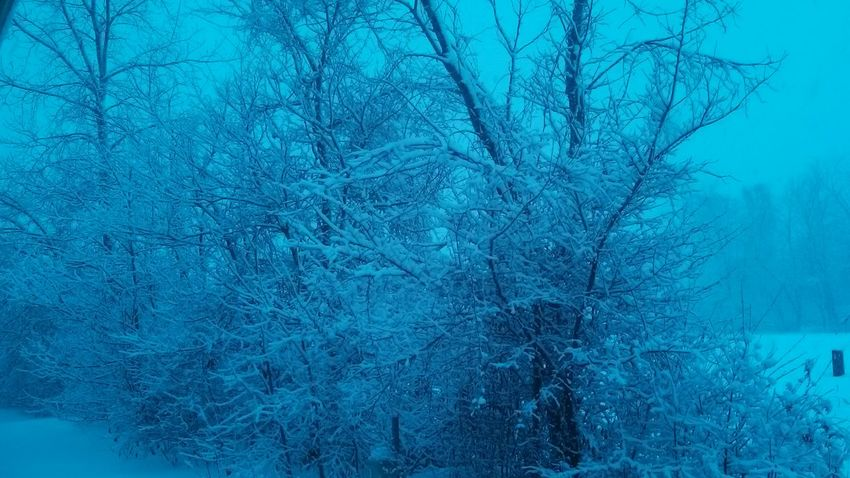 Snow :) Cold Winter (: Winter Trees