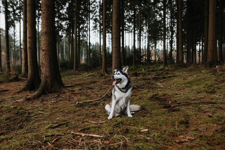 Dog running in forest