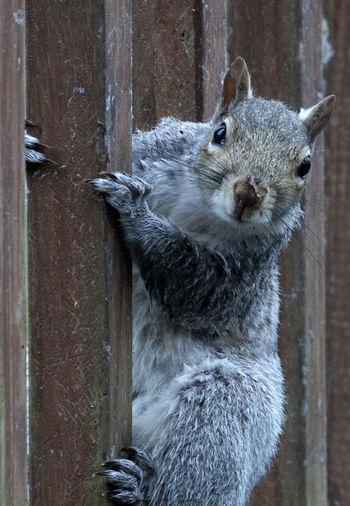 Portrait of squirrel on wood