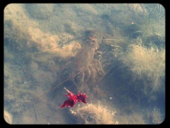 lake creature.