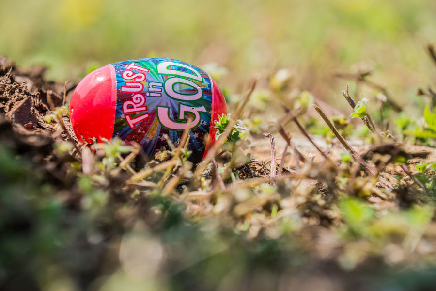 Close-up Day Easter Easter Eggs Flower God Grass Nature No People Outdoors Plant Plastic Easter Eggs Trust